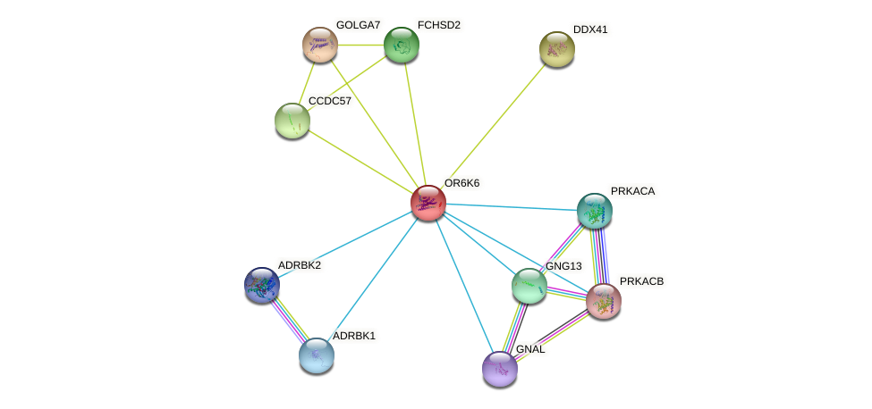 OR6K6 protein (human) - STRING interaction network