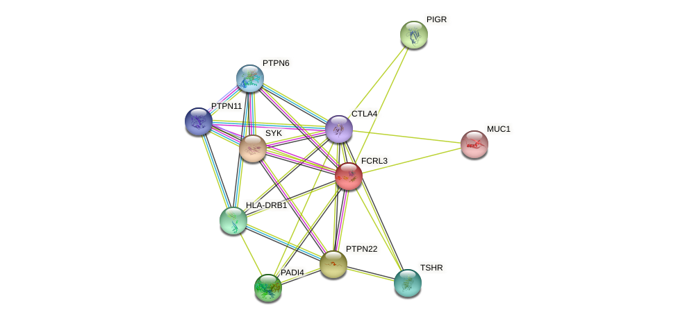 FCRL3 protein (human) - STRING interaction network