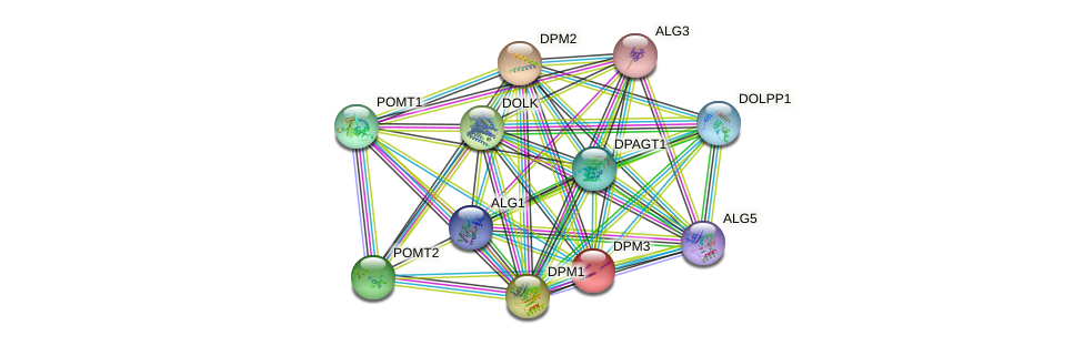 DPM3 protein (human) - STRING interaction network