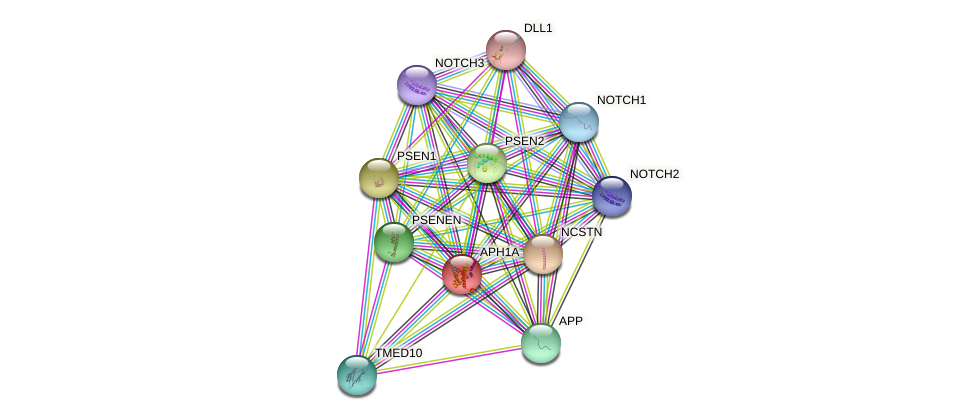 APH1A protein (human) - STRING interaction network