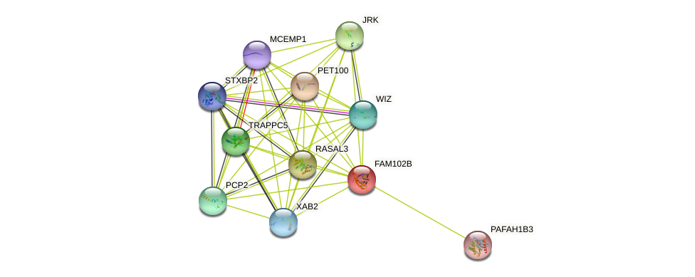 FAM102B protein (human) - STRING interaction network