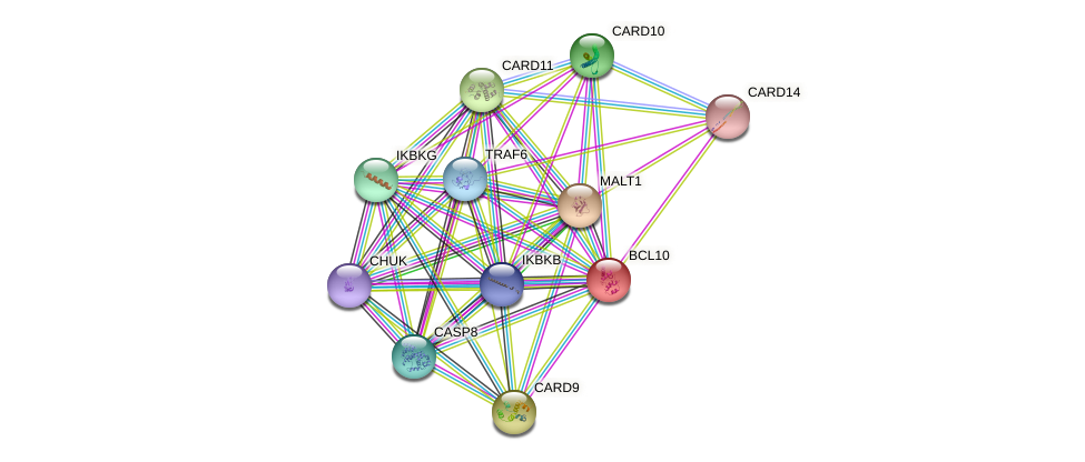 BCL10 protein (human) - STRING interaction network
