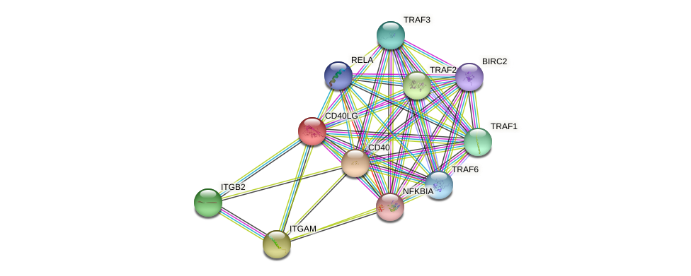 CD40LG protein (human) - STRING interaction network