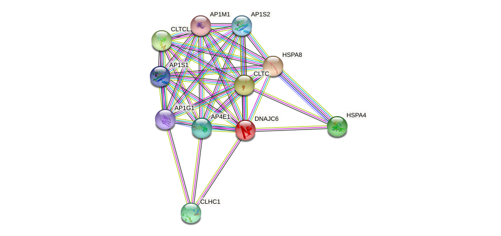 DNAJC6 protein (human) - STRING interaction network