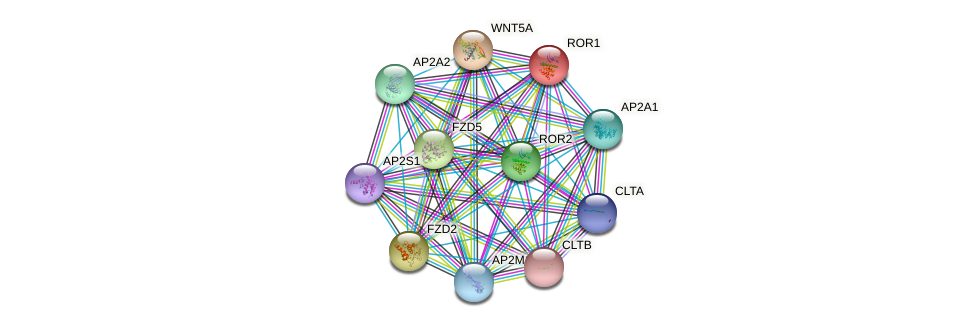 ROR1 protein (human) - STRING interaction network