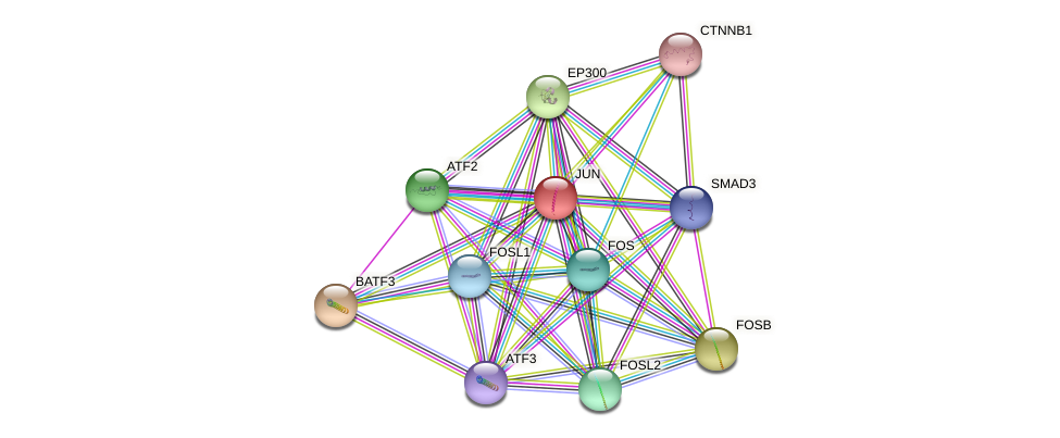 JUN protein (human) - STRING interaction network