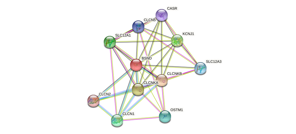 BSND protein (human) - STRING interaction network