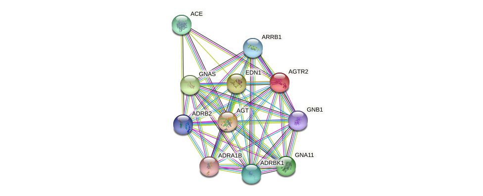 AGTR2 protein (human) - STRING interaction network