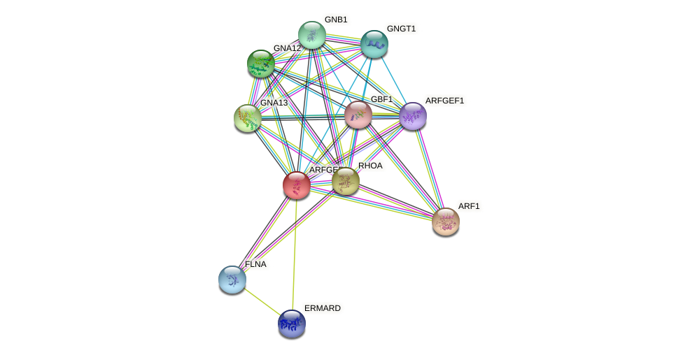 ARFGEF2 protein (human) - STRING interaction network