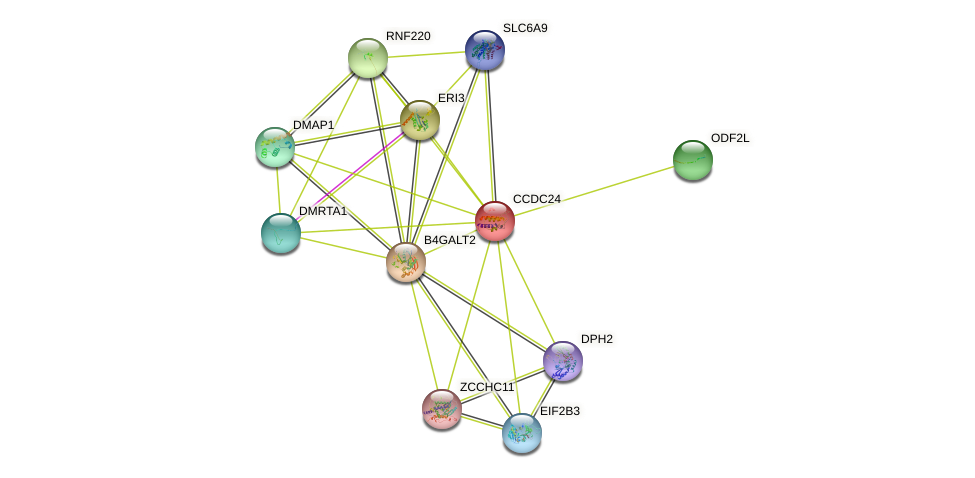CCDC24 protein (human) - STRING interaction network