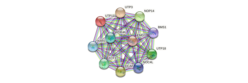 UTP11L protein (human) - STRING interaction network