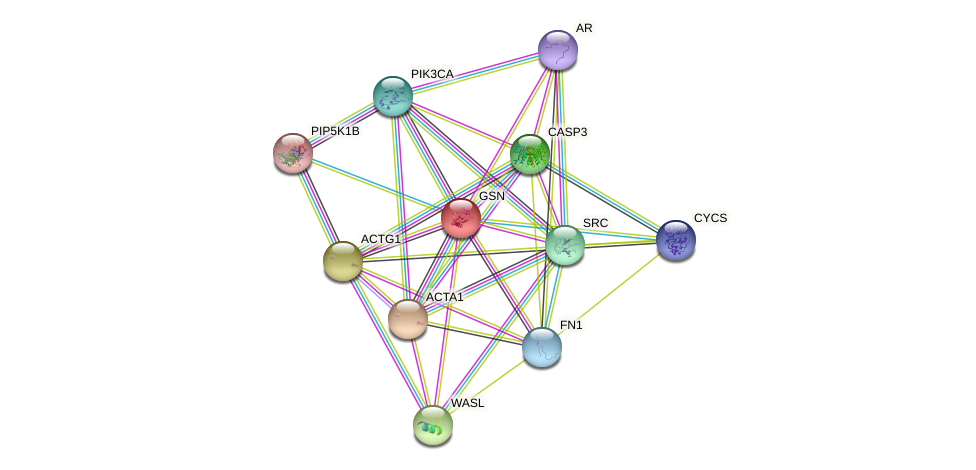 GSN protein (human) - STRING interaction network