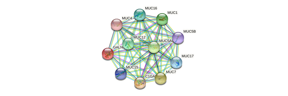 GALNT12 protein (human) - STRING interaction network