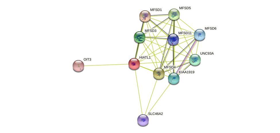 HIATL1 protein (human) - STRING interaction network