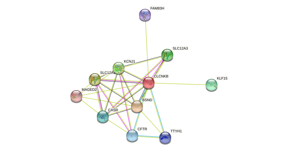 CLCNKB protein (human) - STRING interaction network