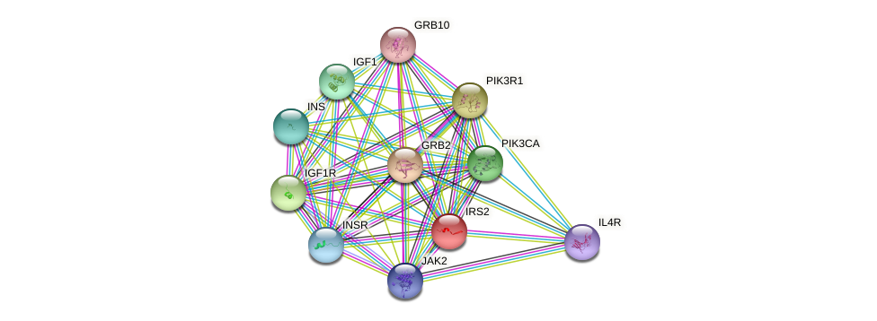 IRS2 protein (human) - STRING interaction network