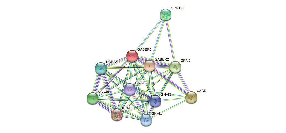 GABBR1 protein (human) - STRING interaction network