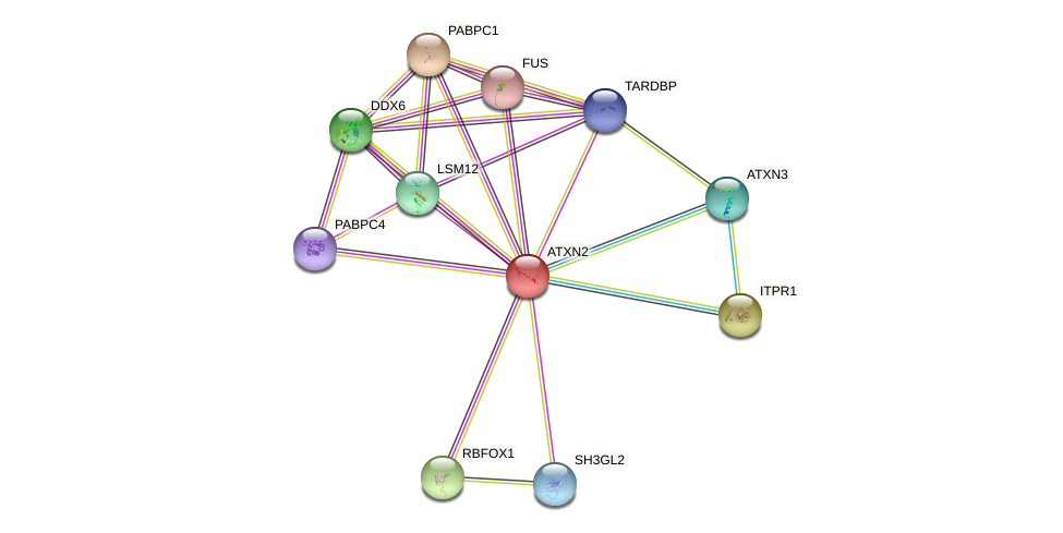 ATXN2 protein (human) - STRING interaction network