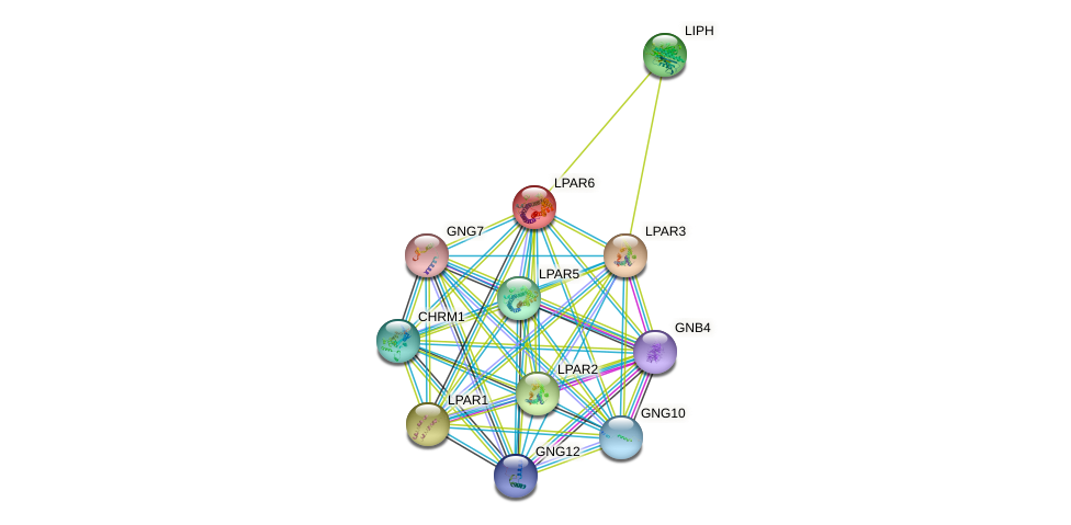 LPAR6 protein (human) - STRING interaction network