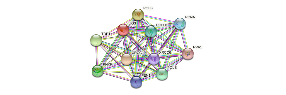 LIG3 protein (human) - STRING interaction network