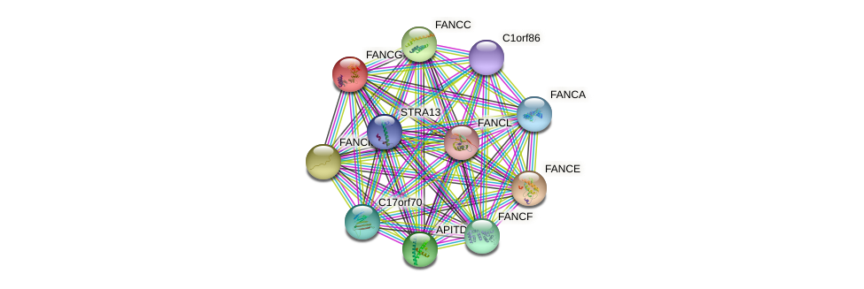 FANCG protein (human) - STRING interaction network
