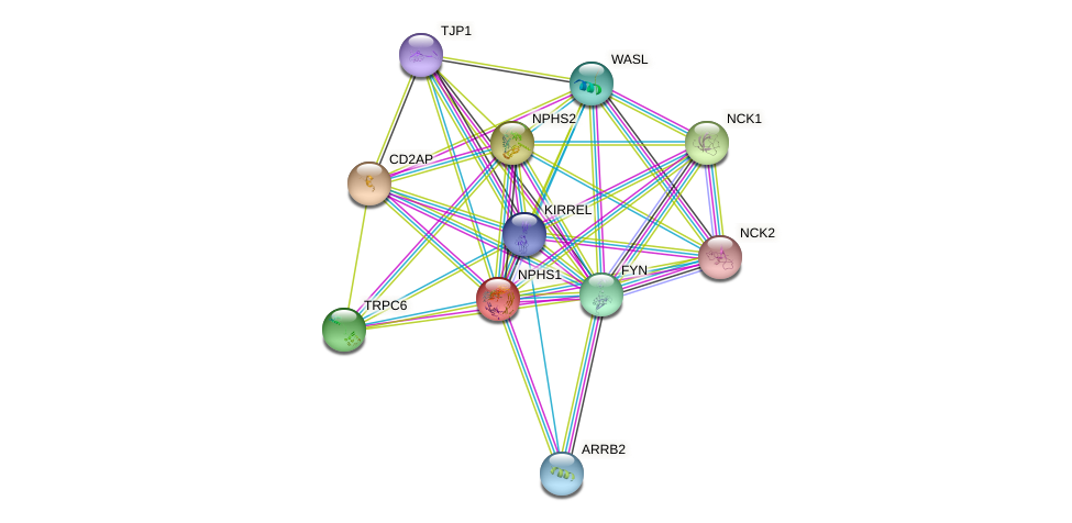 NPHS1 protein (human) - STRING interaction network