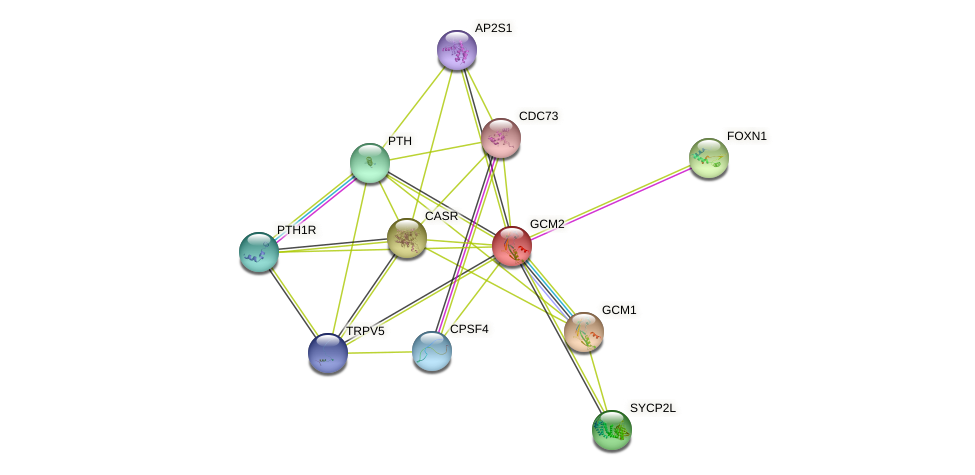 GCM2 protein (human) - STRING interaction network