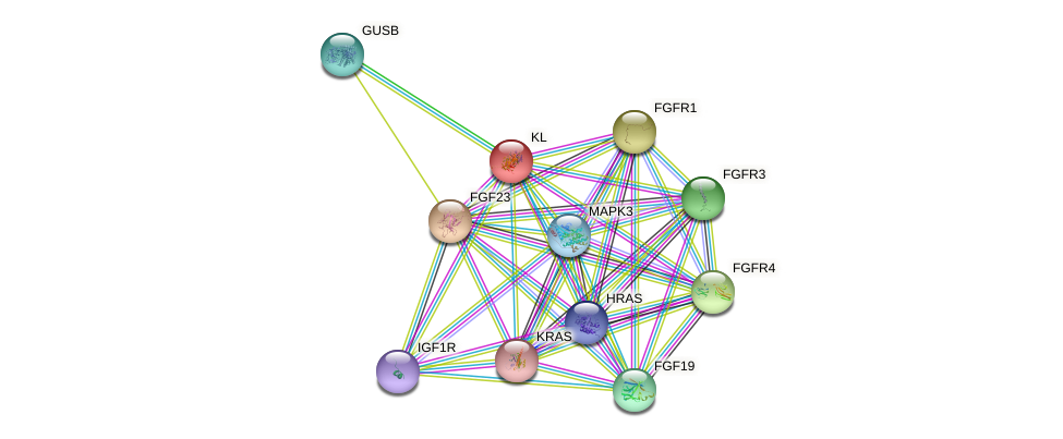 KL protein (human) - STRING interaction network