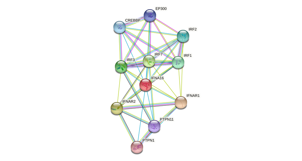 IFNA16 protein (human) - STRING interaction network