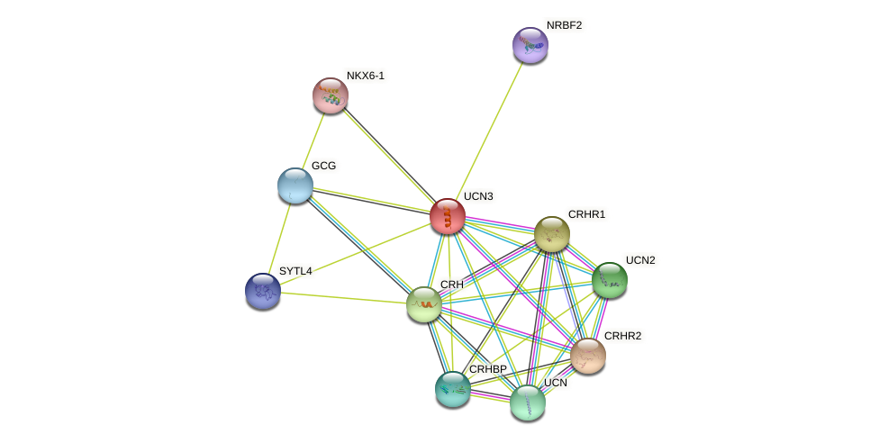 UCN3 protein (human) - STRING interaction network