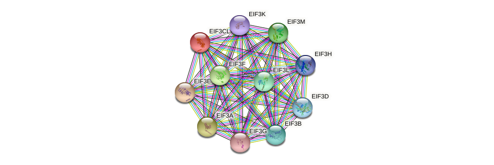 EIF3CL protein (human) - STRING interaction network