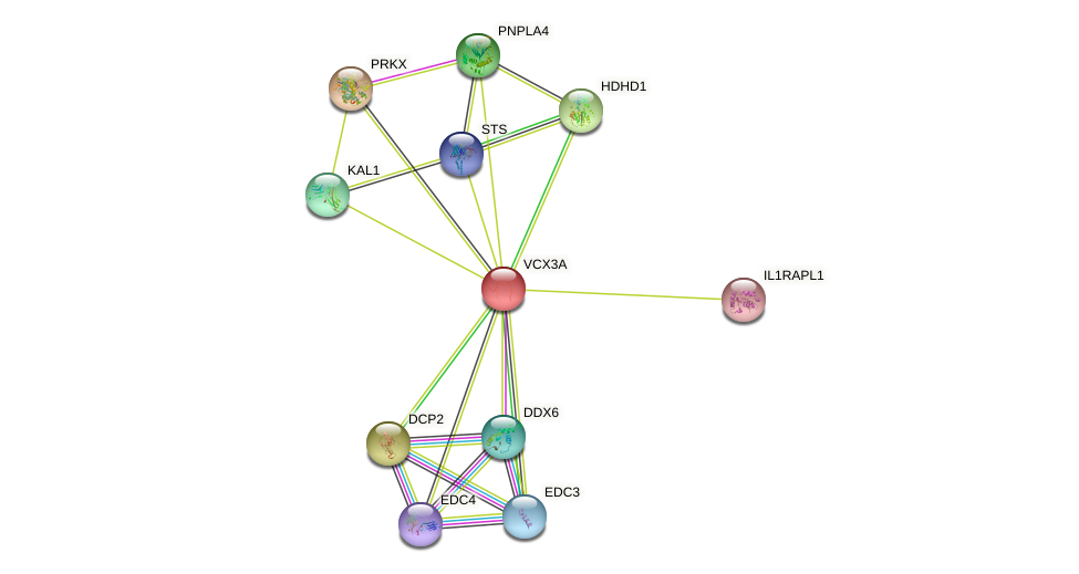 VCX3A protein (human) - STRING interaction network