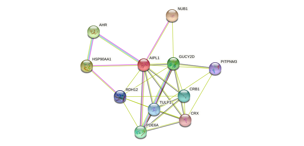 AIPL1 protein (human) - STRING interaction network