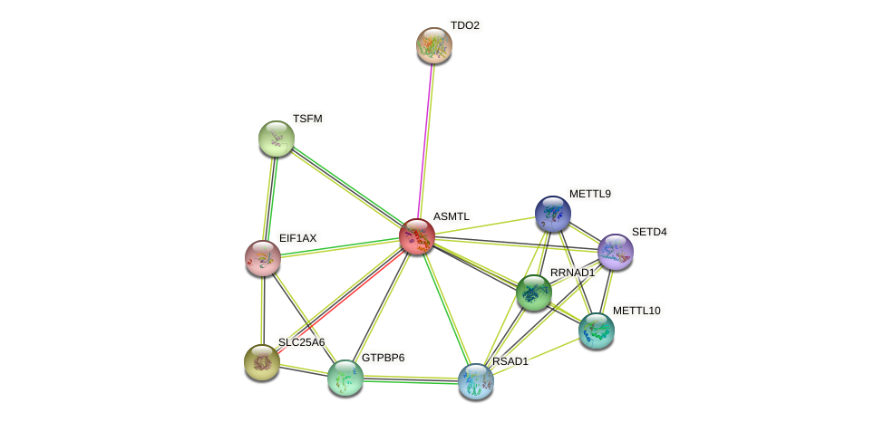 ASMTL protein (human) - STRING interaction network