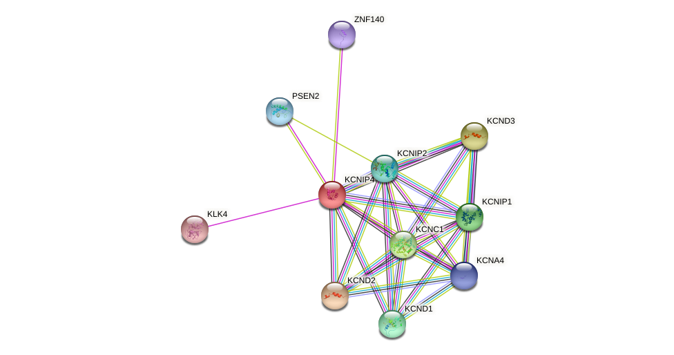 KCNIP4 protein (human) - STRING interaction network
