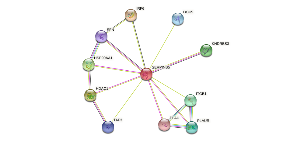 SERPINB5 protein (human) - STRING interaction network