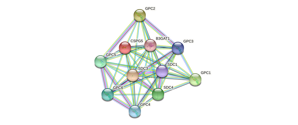 CSPG5 protein (human) - STRING interaction network