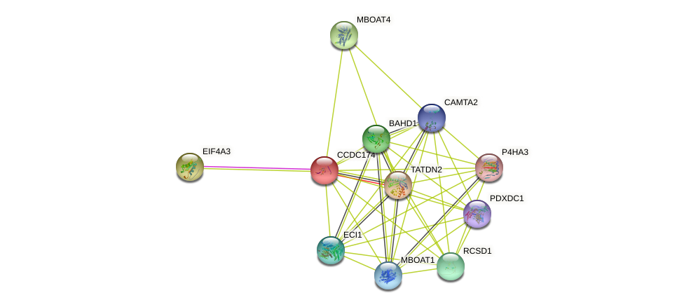 CCDC174 protein (human) - STRING interaction network
