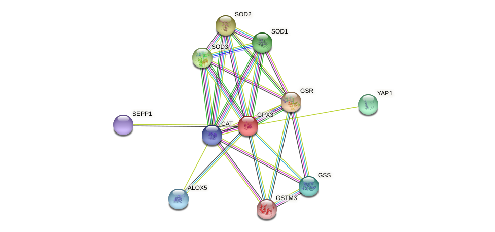 GPX3 protein (human) - STRING interaction network