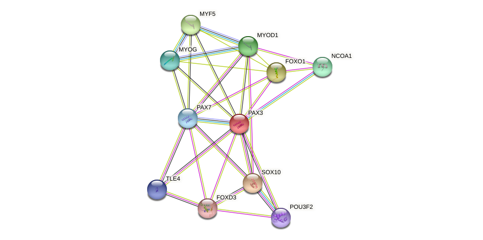 PAX3 protein (human) - STRING interaction network