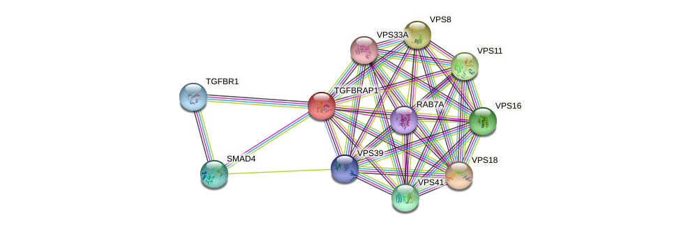 TGFBRAP1 protein (human) - STRING interaction network