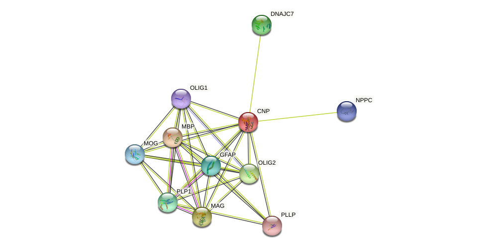 CNP protein (human) - STRING interaction network