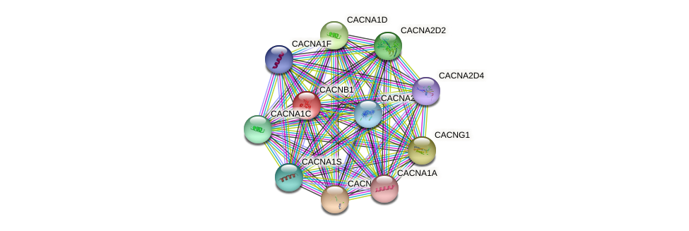 CACNB1 protein (human) - STRING interaction network