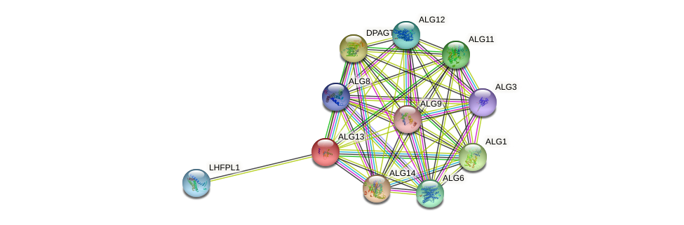 ALG13 protein (human) - STRING interaction network