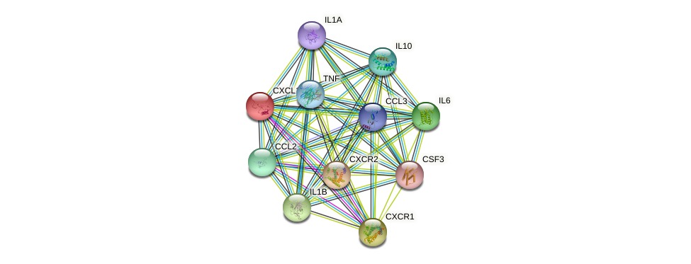 CXCL1 protein (human) - STRING interaction network
