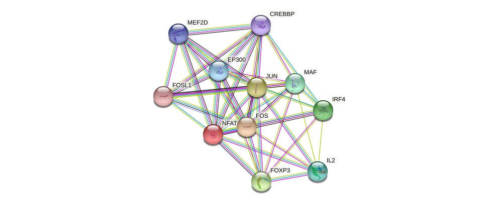 NFATC2 protein (human) - STRING interaction network