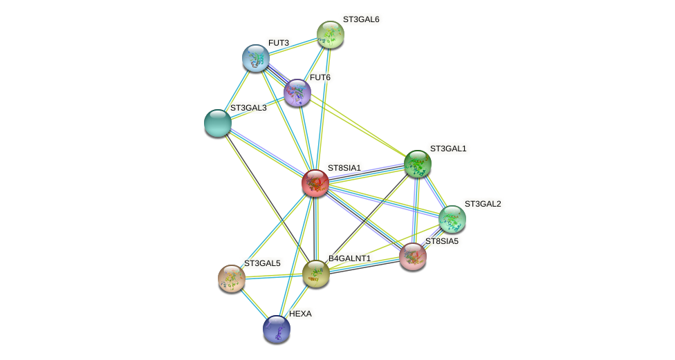 ST8SIA1 protein (human) - STRING interaction network