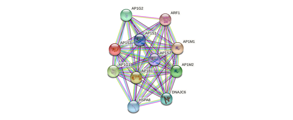 AP1S3 protein (human) - STRING interaction network