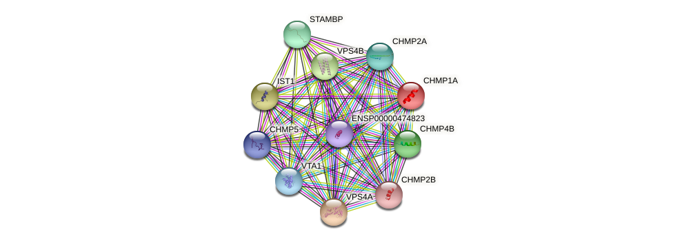 CHMP1A protein (human) - STRING interaction network