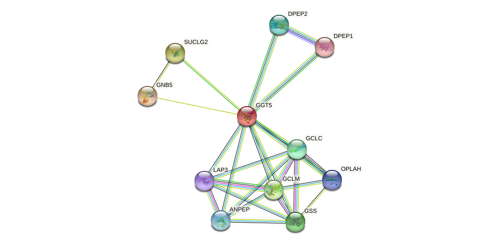 GGT5 protein (human) - STRING interaction network
